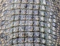 Detaljen av alligatorläder Royaltyfri Foto