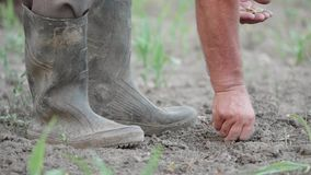 Detaljen av bondehänder med frö som planterar i jordningen, smutsar ner kängor stock video