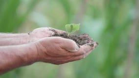 Detaljen av bonden räcker den hållande lilla gröna växten, suddighetsbakgrund, hopp arkivfilmer