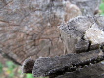 Detaljen av en stam Arkivfoton
