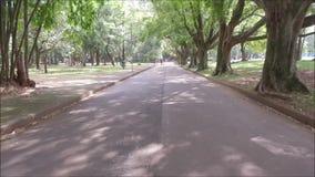 Detaljen av en stor gummiträd i den berömda Ibirapueraen parkerar i Sao Paulo lager videofilmer