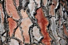 Detaljen av ett rött sörjer trädskället Arkivbild