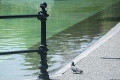 Detaljen av parkerar sjön med duvan Arkivfoton