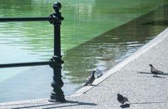Detaljen av parkerar sjön med duvor Arkivfoton