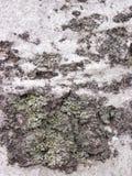 Detaljen av sk?llet som eroderas vid tid, v?xt av ett m?nghundra?rigt, parkerar Texturer och skrapor p? sk?llet som orsakas vid t arkivbilder