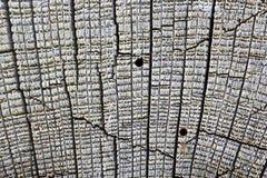 Detaljen av träborr anfaller på planka arkivfoton