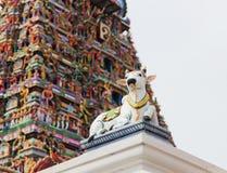 Detaljer av den indierKapaleeswarar templet, Chennai, Indien royaltyfri bild