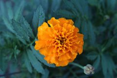 Detaljer av den orange blomman arkivbild
