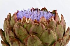 Detaljer av en fjällig stor kronärtskocka Arkivfoto
