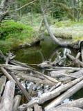 Detaljer av en skog Arkivbilder