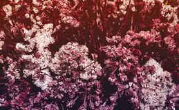 Detaljer av en torkad dekorativ blommaordning, höstsignaler royaltyfri fotografi