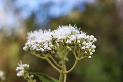 Detaljer av en vit blomma royaltyfria foton