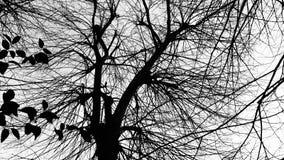 Detaljer av filialen av trädet arkivbilder