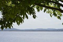 Detaljer av filialer av ett träd i tropiskt klimat, den Caroni floden och berg på bakgrund av bilden royaltyfria foton