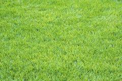 Detaljer av ljus - bakgrund #1 för grönt gräs royaltyfri bild