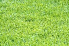 Detaljer av ljus - bakgrund #2 för grönt gräs arkivbilder