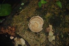 Detaljer av naturen, härlig naturlig sammansättning Royaltyfria Bilder