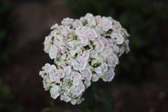 Detaljer av små blommor royaltyfria foton