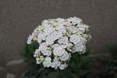 Detaljer av små vita blommor royaltyfria foton