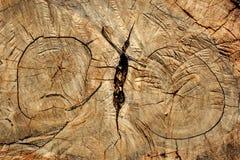 Detaljer av stubben Arkivfoton