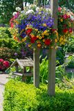 Detaljer av vår- eller sommarträdgården som är full med färgrika blommor royaltyfri bild