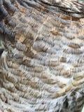 Detaljer för fågelfjädrar Royaltyfria Foton
