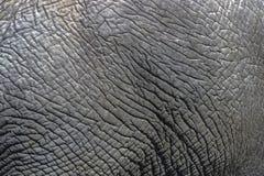 Detaljer för slut av den lösa elefanten flår upp bakgrund, Arkivbilder
