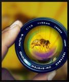 detaljer i exponeringsglas Fotografering för Bildbyråer