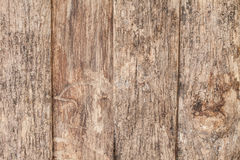 Detaljer på det gamla trät i trädgården är härligt Arkivfoton