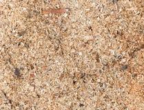 Detaljerad bakgrundstextur för Sawdust arkivfoto