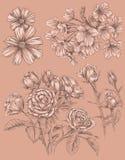 Detaljerad dragen blommauppsättning för Sketchbook hand Arkivfoton