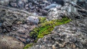 Detaljerad gräsmakro Arkivfoton