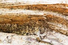 Detaljerad grov textur av trä för bakgrund yttersida abstrakt begrepp, bakgrund Arkivbild