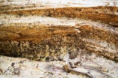 Detaljerad grov textur av trä för bakgrund yttersida abstrakt begrepp, bakgrund Royaltyfri Foto