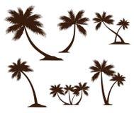detaljerad inspiration för design för logo för vektor för kokospalmkonturillustration stock illustrationer