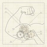 detaljerad muskel för utkastteckningskugghjul Arkivbilder
