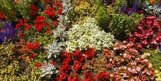 Detaljerad sikt av en trädgård med olika blommor royaltyfria foton