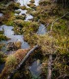 Detaljerad sikt av lösa våtmarker och träsk som ses på en stor naturreserv royaltyfria bilder