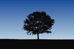 detaljerad silhouettetree Royaltyfri Foto