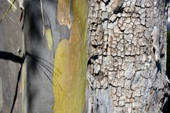 Detaljerad textur och färg av trädet med krypet arkivfoton