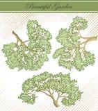 detaljerad treesvektor för filialer Arkivbilder