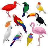 Detaljerad vektoruppsättning av olika exotiska fåglar Lösa varelser med färgrika fjädrar Fauna- och djurlivtema stock illustrationer
