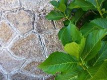 detaljerad verklig sten för bakgrund mycket Fotografering för Bildbyråer