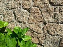 detaljerad verklig sten för bakgrund mycket Royaltyfria Bilder