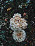 Detaljerade blommor Arkivbild