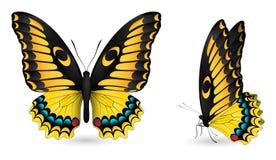 detaljerade element för fjäril Bekläda, och sidan beskådar Arkivbilder