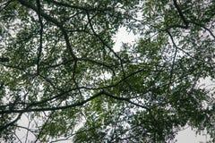 Detaljerade trädfilialer Royaltyfri Foto
