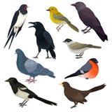 Detaljerade vektorsymboler av olik art av fåglar Djurliv- eller faunatema Beståndsdelar för ornitologiboken, tryck eller stock illustrationer