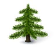 Detaljerat sörja trädet stock illustrationer