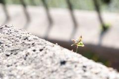 Detaljerat skott av en växt arkivbild